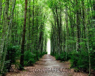 Ruta por Mata de Haya, un hayedo que es el pulmón del valle de Belagua
