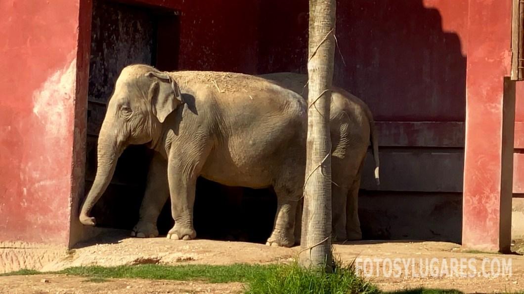 Elefantes de Terra Natura