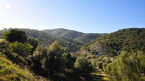An Olivenbäumen mangelt es in Griechenland nicht