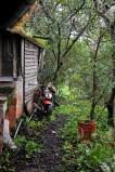 Wild zugewachsen sieht man die Aussenseite der Hütte