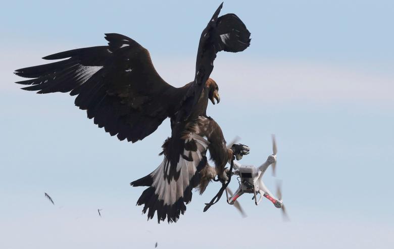 Беркут перехватывает дрон