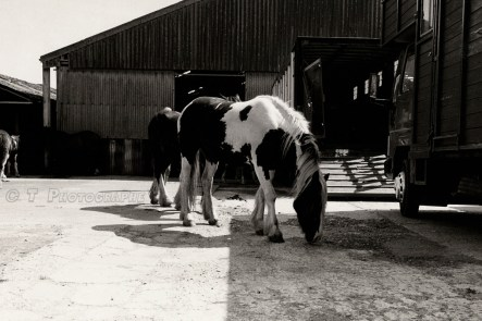 HORSE SALES 2