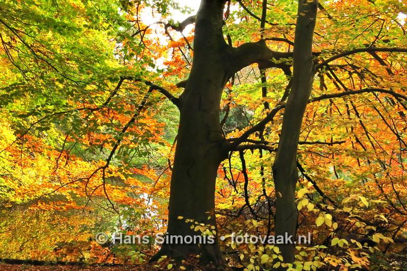 151025_Kleurrijk_Haagsebos_6