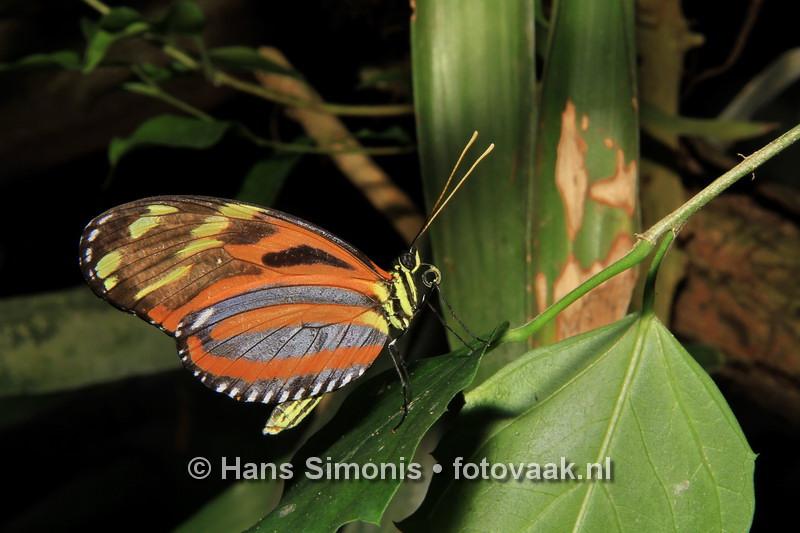 160626_003_Vlinders_aan_de_Vliet