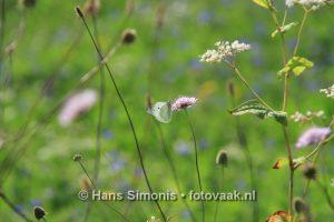 160830003_bij_vlinders-aan_de-vliet