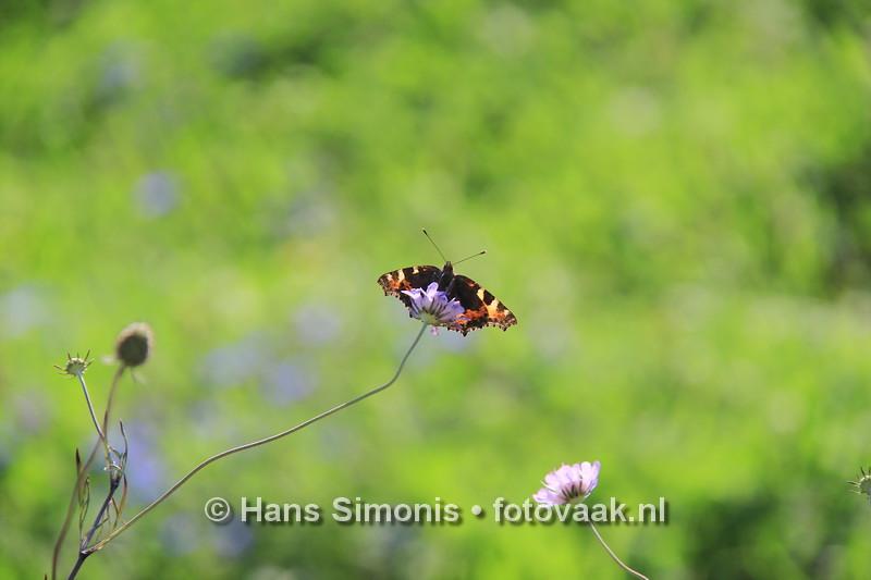 160830013_bij_vlinders-aan_de-vliet