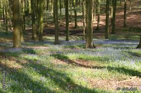Het Brakelbos in de lente