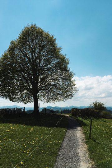 kapf linde-freudenberg-st.gallen-sommer
