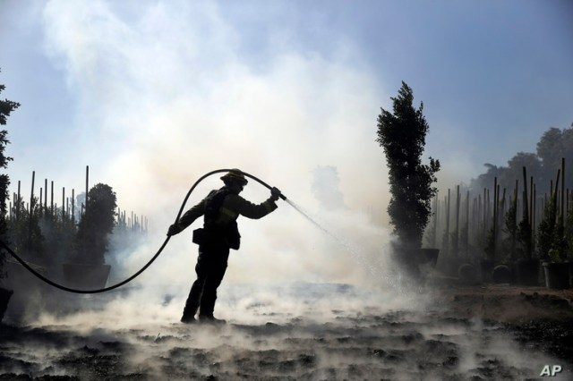 Morgan Clark, a firefighter with the Oxnard Fire Dept., hoses down hot spots created by the Easy Fire on a farm, Oct. 30, 2019, in Simi Valley, California.