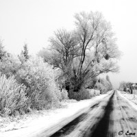 Suburban Winter
