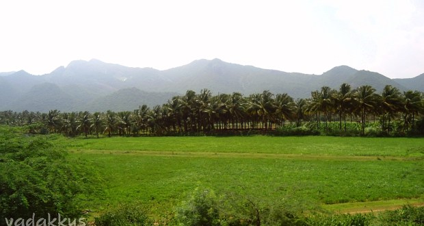 The lush and green fields of Kongu Nadu, from near Coimbatore