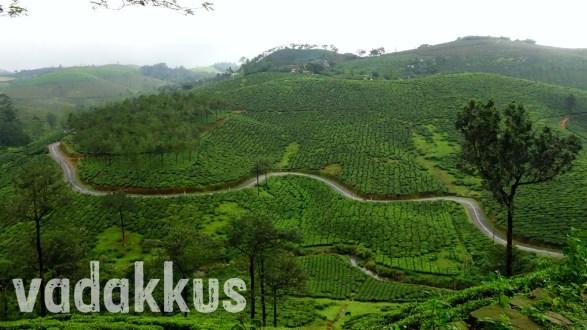 A Winding Road Among Tea Estates in Kerala
