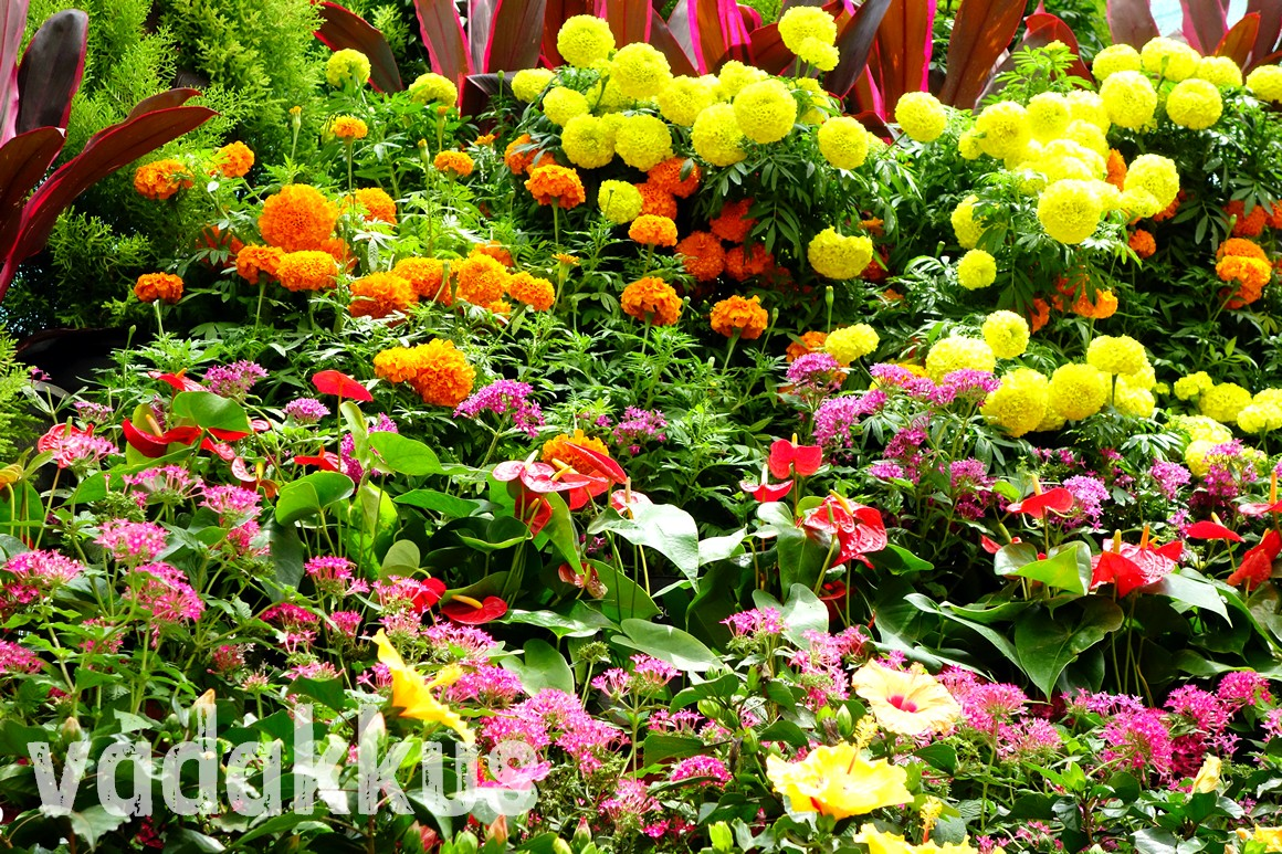 Picture of flower arrangement dispalys at the Lalbagh flower show