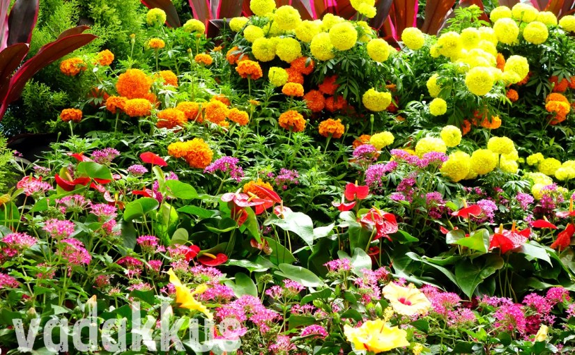 A Flower Garden Display at the Bangalore Lalbagh Flower Show