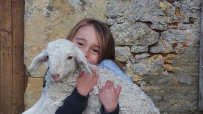 Doux comme un agneau !