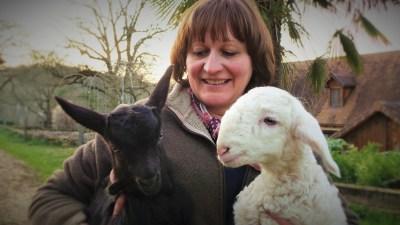 Les cabris et agneaux de la ferme