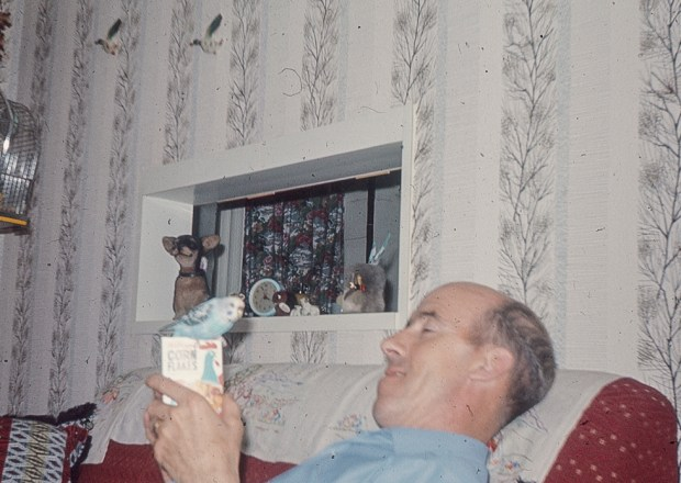 Man and budgie