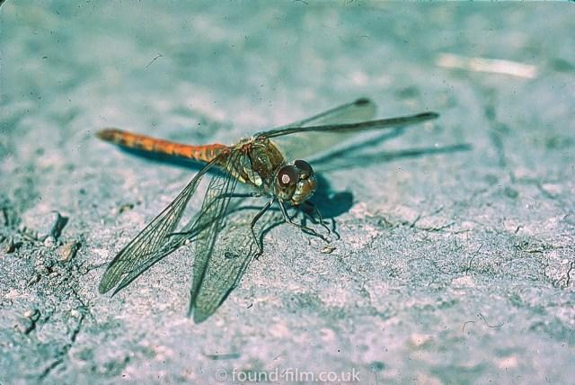 Macro photos on film - Dragonfly