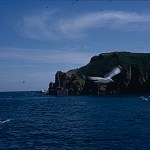 A Kodachrome slide showing seagulls with cliffs and the sea in the background