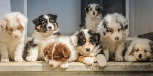 Puppies on a ledge