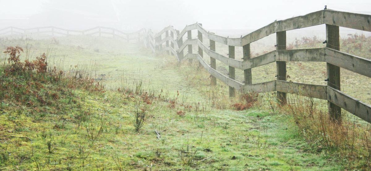 A fence on a green field, disappearing in the fog