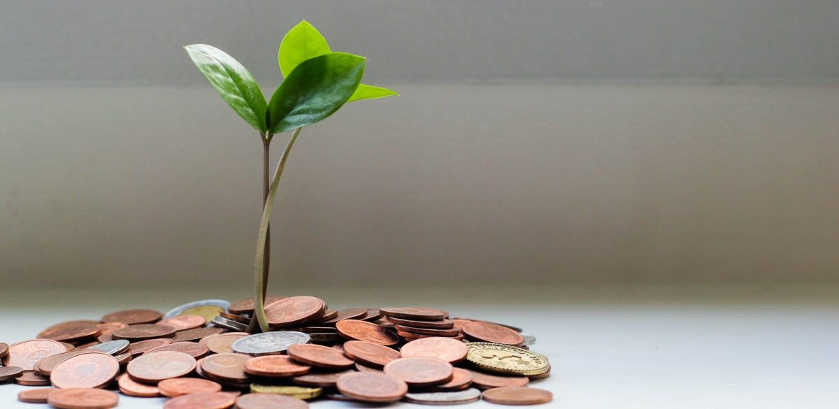 sprout growing from a pile of coins