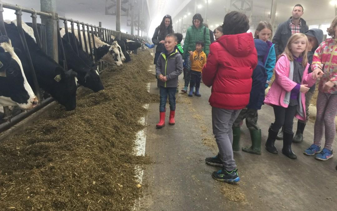 Dairy Farm Excursion