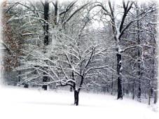 Glenna's Dogwood in the Snow