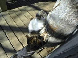scratch cats
