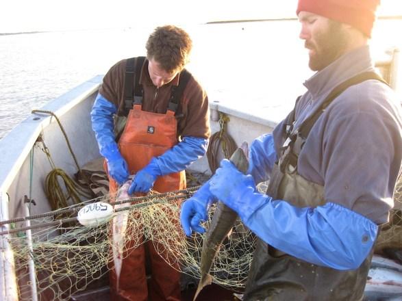 Nathan-Noah-Picking-Fish