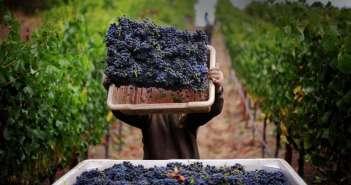 Гастрономические туры по Кипру: виноделие Кипра и дегустация местных вин