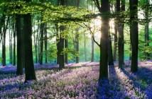 Красивейшие фото сказочного леса в Бельгии — Халлербоса