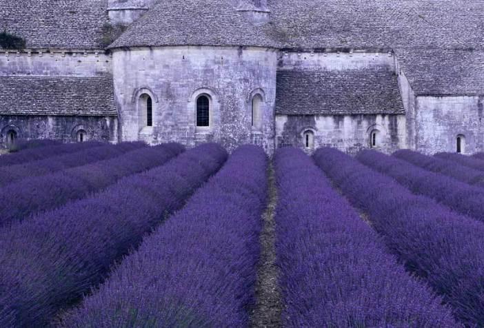Лавандовые поля в аббатстве Сенанк (Прованс, Франция)