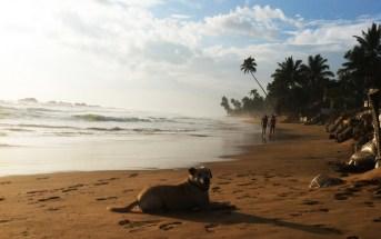 Правила поведения туристов на Шри-Ланке