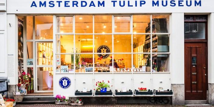 Музей Тюльпанов в Амстердаме
