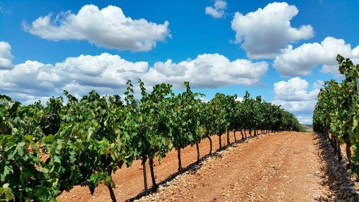 Куда ехать из Мадрида: виноградники Риохи