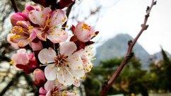 Цветущий Крым весной