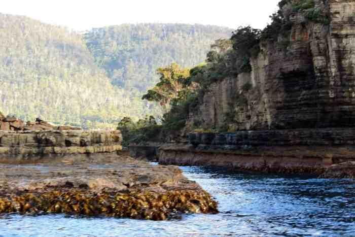 Tasman Island Cruise Tasmania