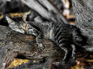 Waikoloa feral cats (14 of 22)