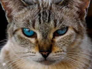 Waikoloa feral cats (17 of 22)