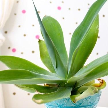 agave - kids bedroom ideas