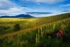 Government Prairie, near Flagstaff   John Tennant