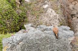 falcon-4