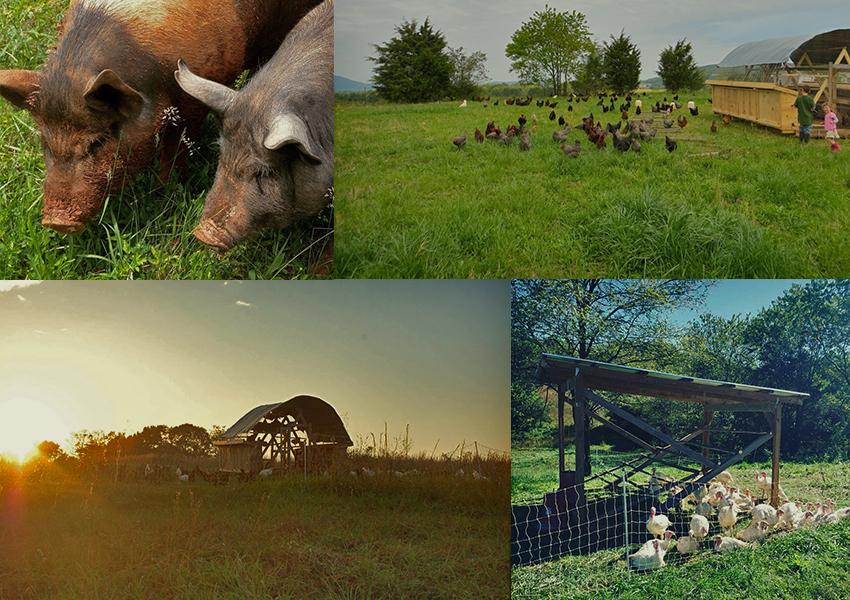 four-corners-farm_our-animals