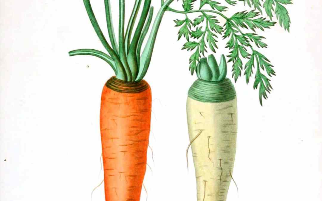 Cider-Glazed Carrot and Quinoa Salad