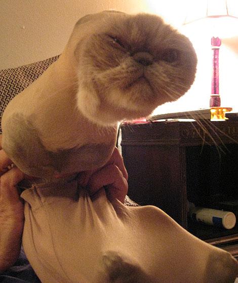 Kitten Costumes