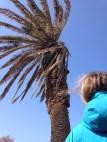 Leto's palm tree