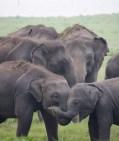 baby elephants saying hello
