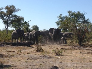elephants on the side of the road
