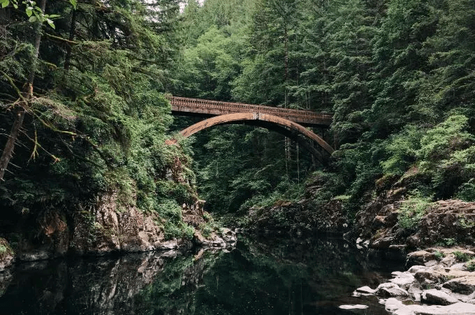 bridgeForest